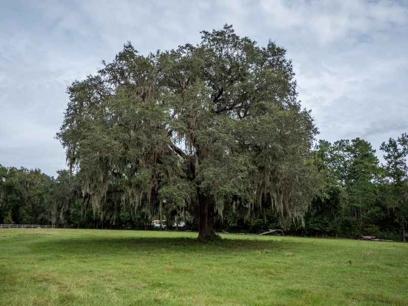 30-acres-open-land-11-4-2019-31