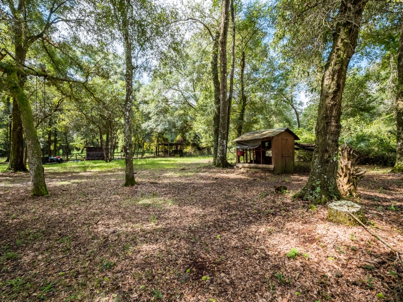 13424-NE-188-Place-Fort-McCoy-FL-32134-Exterior-15-of-28
